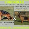 CACHORROS Pastor Alemán DISPONIBLES Malaga VASTO della Valle D itria * Xandra de Coroninas