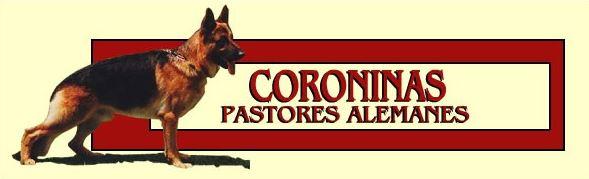 Pastores Alemanes de Coroninas, Criadero de Pastores Alemanes, Venta de Pastores Alemanes, Roy, Bonita, German Shepperd, Estepona, Malaga